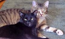 cats-lex2